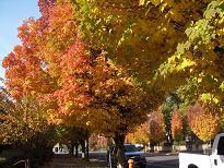 本次 POD 舉辦地波特蘭市美麗的楓樹